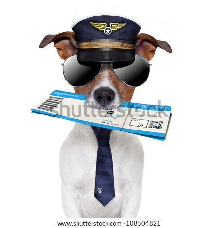 boarding pass dog  with hat and tie - stock photo