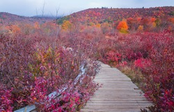 Boardwalk and footpath through Graveyard Fields, a flat mountain valley in the Blue Ridge Mountains southwest of Asheville in Western North Carolina in autumn.