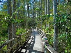 Boardwalk at Audubon Corkscrew Swamp Sanctuary, Florida
