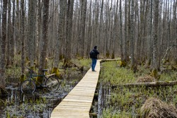 boardwalk in swamp hiking trail. natural environmental detail view in latvia