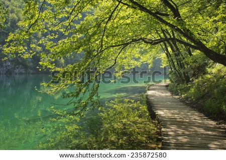 Boardwalk in the forest -Plitvice