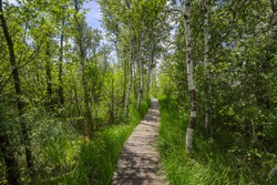 Boardwalk in the nature reserve Ibmer Moor, at Ibm