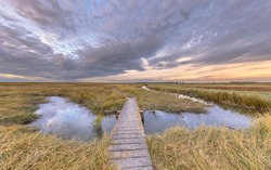 Boardwalk in Tidal Marshland nature reserve Verdronken land van Saeftinghe in Province of Zeeland. Netherlands