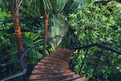 Boardwalk in tropical rainforest, Botanic Gardens.