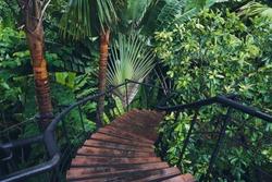 Boardwalk in tropical rainforest, Botanic Gardens.