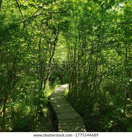 Boardwalk leading through the woods, Dartmouth, MA Stok fotoğraf ©