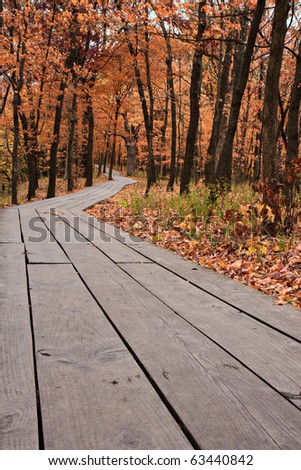 boardwalk leads into colorful orange, yellow and red autumn forest