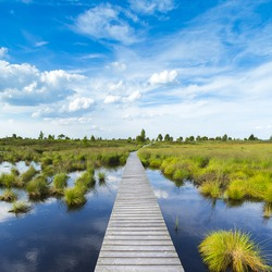 boardwalk over a bog lake with Blue Cloudy Sky