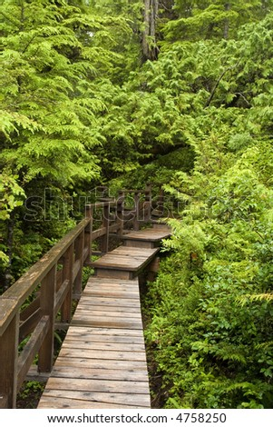 boardwalk path in Canadian rainforest