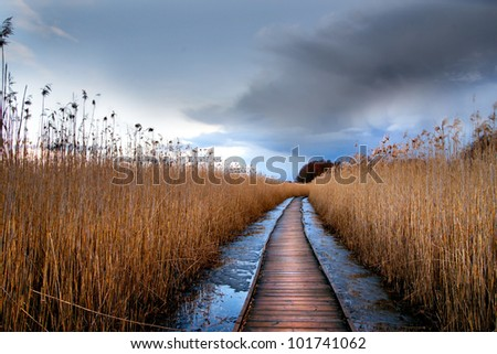 Boardwalk path through wetlands area in early spring