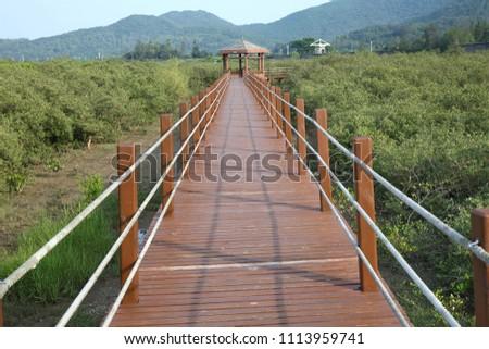 Boardwalk through mangrove forest