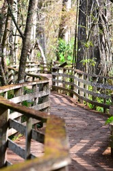 Boardwalk through the Everglades in southern Florida