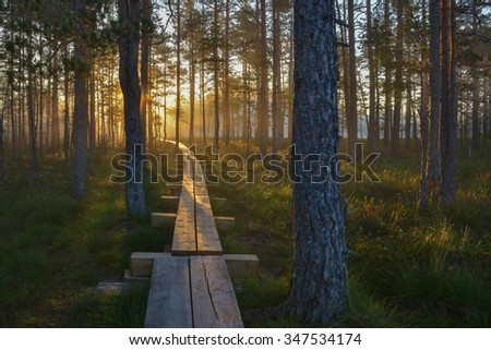 Boardwalk through the forest with rising sun behind the trees.