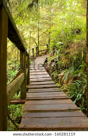 Boardwalk through the mysterious cold rain forest on Vancouver Island, Canada