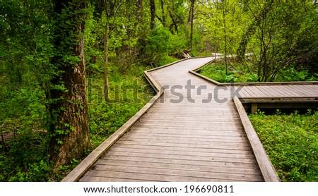 boardwalk trail through the...