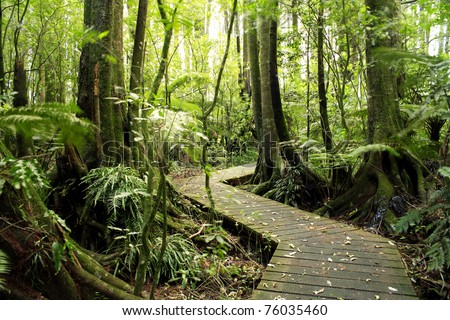 Boardwalk winding through forest