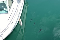Boat on the sea. White motor boat with reflection in transparent sea water and blurred image of fish