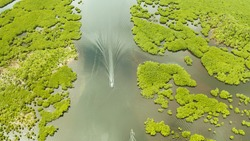 Boat sails in the mangroves among green trees aerial view. Mangrove jungles, trees, river. Mangrove landscape