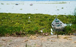 Boat trapped in the invasive species of common water hyacinth at the Chapala Lake