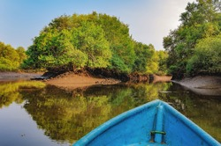 Boat trip in mangrove tunnels in Salim Ali Bird Sanctuary, Goa, India. Reflection of the jungle in the water channels. The boat chooses the way through the nature reserve.