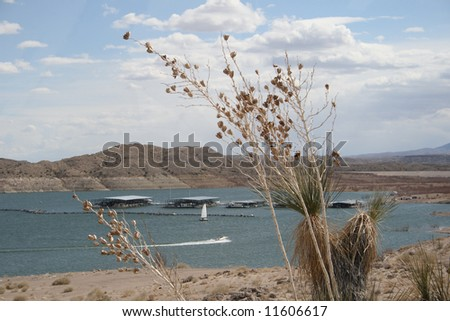 Boats on the lake and the marina on Elephant Butte Lake in southern New Mexico, framed by desert plants in the foreground