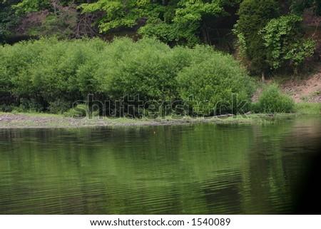 Bobber in a Lake