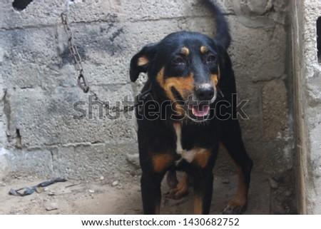 "bobby body ""Watchdog"" in the garden #1430682752"