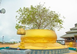 Bodhi Tree at Nelligala International Buddhist Center, Sri Lanka. This temple is well known and visited by both Buddhists and non-Buddhists. The natural environment is mind soothing.