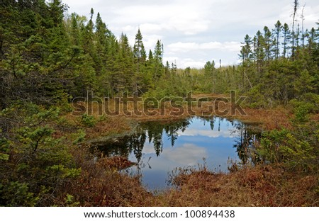 Bog ecosystem with black spruce trees and tamarack trees along Raven Trail in North Highland-American Legion Forest, Wisconsin