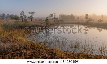 bog landscape in the morning mist, fuzzy swamp contours of pine, reflections in the bog lake, bog vegetation, sunrise over the swamp, Madiesenu swamp, Dikli, Latvia