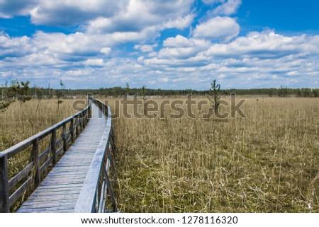 Bog near Moszne Lake, Polesie National Park (Poleski Park Narodowy). Nature trail 'Dominik Oak' (Dąb Dominik). Great path for walking and rest. Zdjęcia stock ©