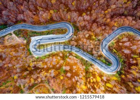 Bogata Forest, Romania, extreme curved road in autumn fall season #1215579418