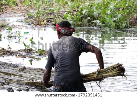 Bogura, Bangladesh – August 21, 2019: Asian worker extracting fibers from retted jute plants in the pond water in a rural area Stok fotoğraf ©