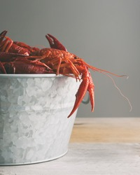 Boiled crawfish in a galvanized steel bucket.