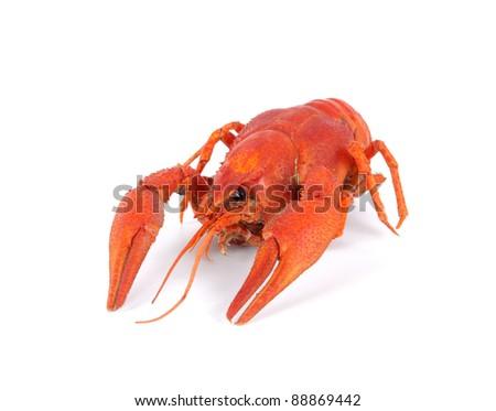 Boiled crawfish isolated on white background