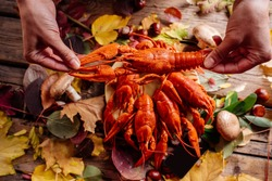 Boiled crayfish in hands of woman on wooden table with autumn leaves, mushrooms and chestnuts.
