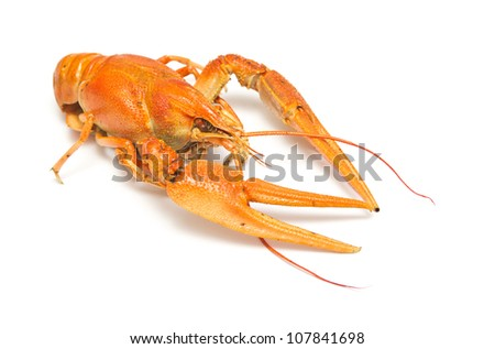 Boiled crayfish on white background