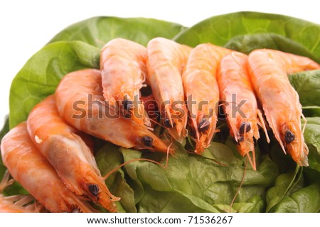 Boiled shrimps against a white background