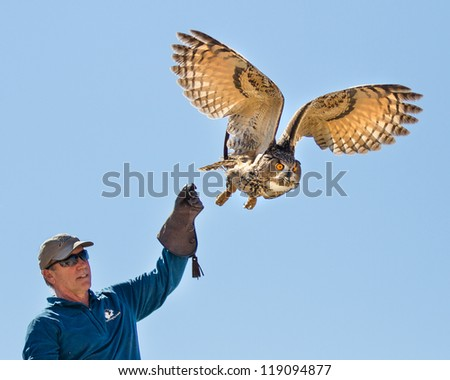 BOISE, IDAHO - OCTOBER 7 : Unidentified trainer at World Center for the Birds of Prey lets a a Eurasian Eagle owl go  on October 7, 2012.