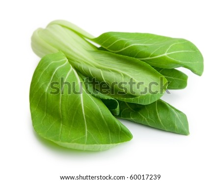 Bok choy (chinese cabbage or Qing geng cai) isolated on white with natural shadows