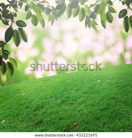 bokeh and grass on background retouch - Shutterstock ID 435221695