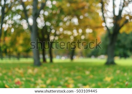 bokeh background of maple tree with bright autumn leaves in sunlight, fall season - Shutterstock ID 503109445