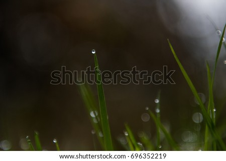 Bokeh effect of drops of water on grass in a forest #696352219