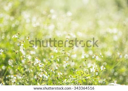 Bokeh from the golden light shining morning dew on the grass in winter. - Shutterstock ID 343364516
