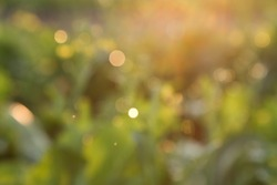 Bokeh golden evening on the summer meadow, natural landscape