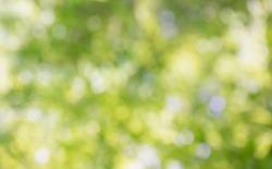 Bokeh green natural blurry background