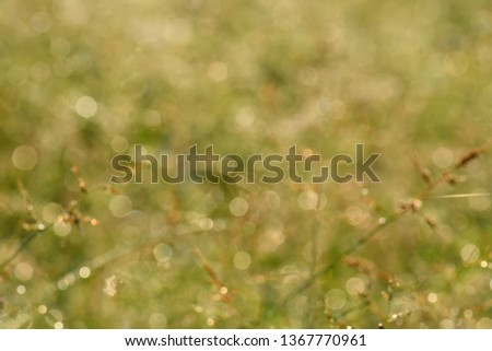 Bokeh images of grass flowers in the morning, used as a background image. make the image blur #1367770961