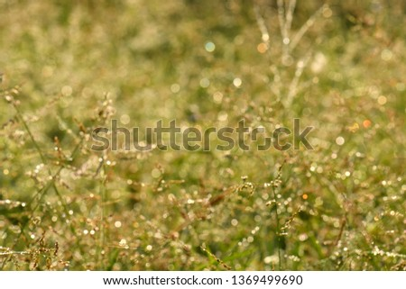 Bokeh images of grass flowers in the morning, used as a background image. make the image blur #1369499690