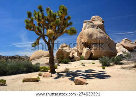 bolder piles in joshua tree  national park, california