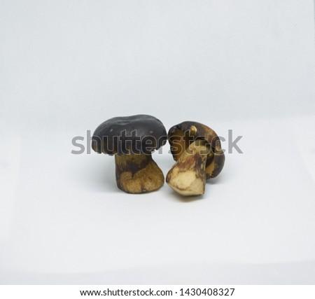 Bolete mushrooms are seasonal food of Isaan people.